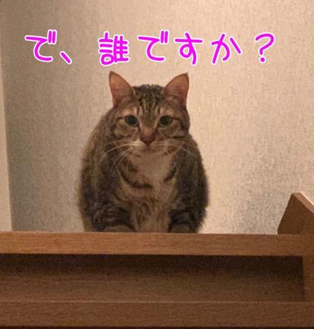 誰ですか猫さん
