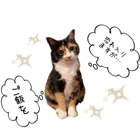 三毛ネコさん