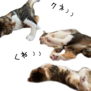 クネクネ猫さん