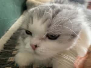 ブラシ銀さん猫