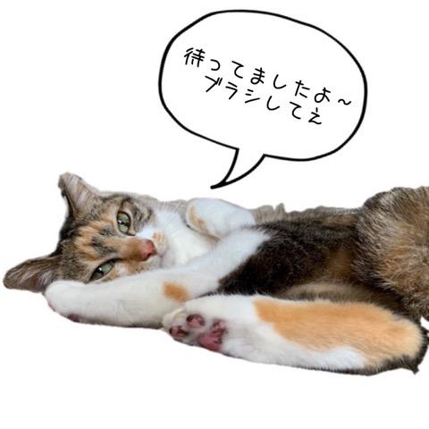 三毛ネコ姉妹