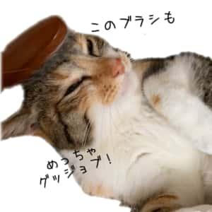 ブラッシング猫さん