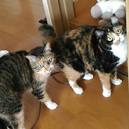 Mix猫 2匹