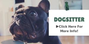 犬のお世話ページ
