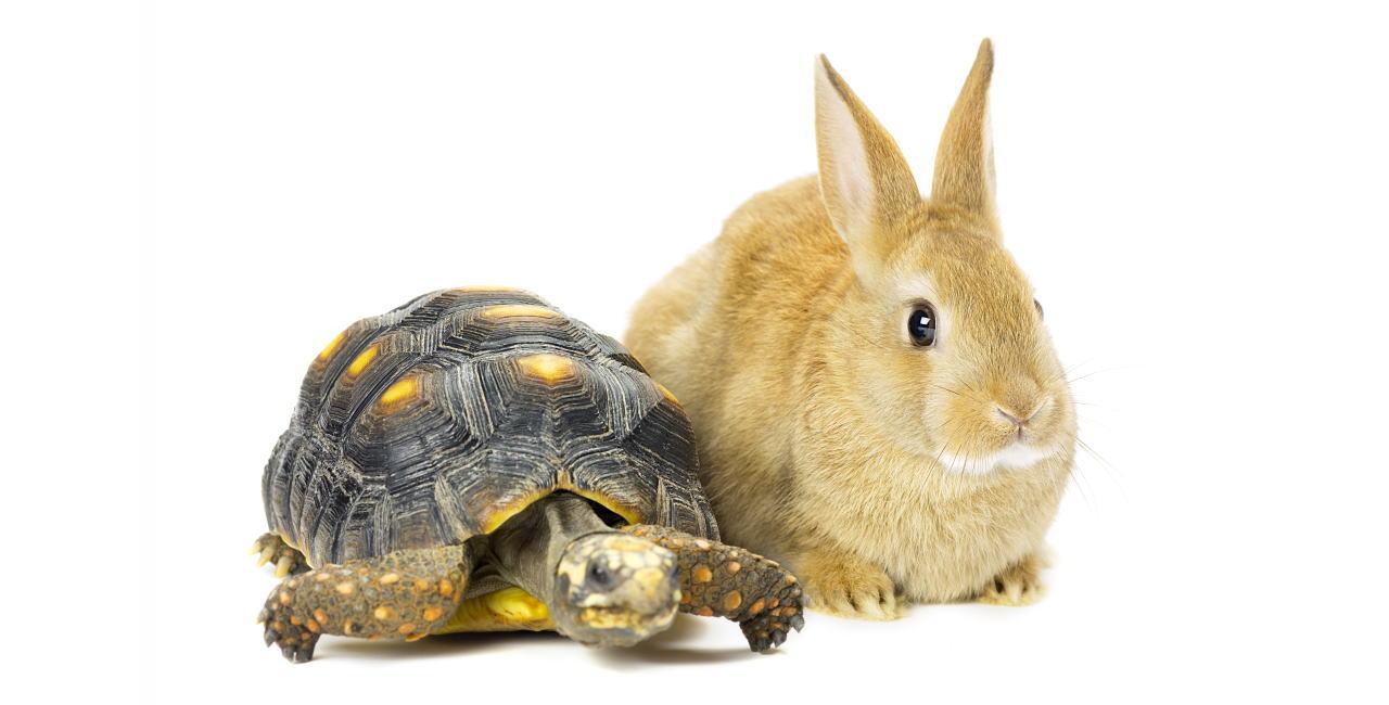 小動物・爬虫類のサービス内容